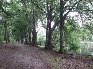 Sentier de l'étang des landes à Saint Paul en Limousin