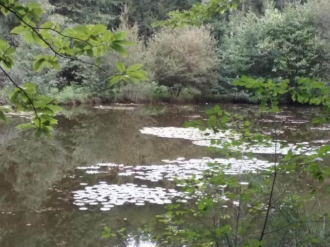 Le sentier de mon dilu, randonnée familiale à Saint Paul - Limousin