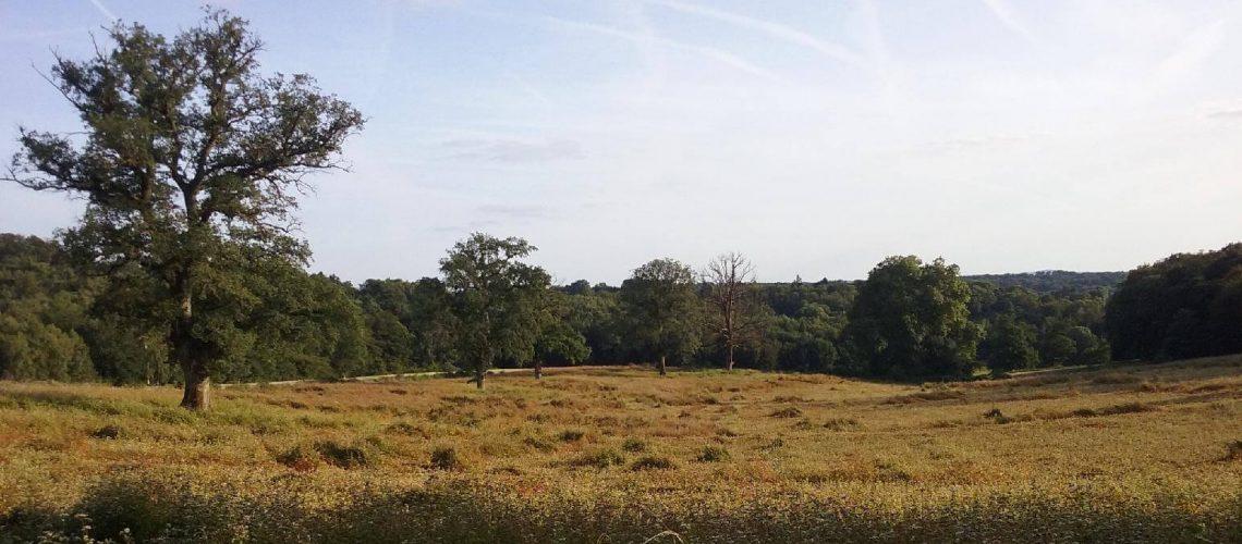Campagne du Limousin