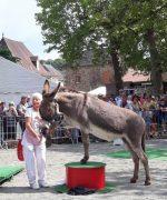 Fête de l'âne