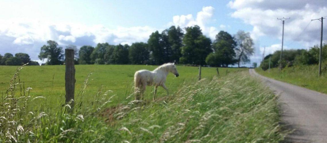 A cheval en Limousin