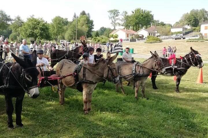 Course d'ânes attelés