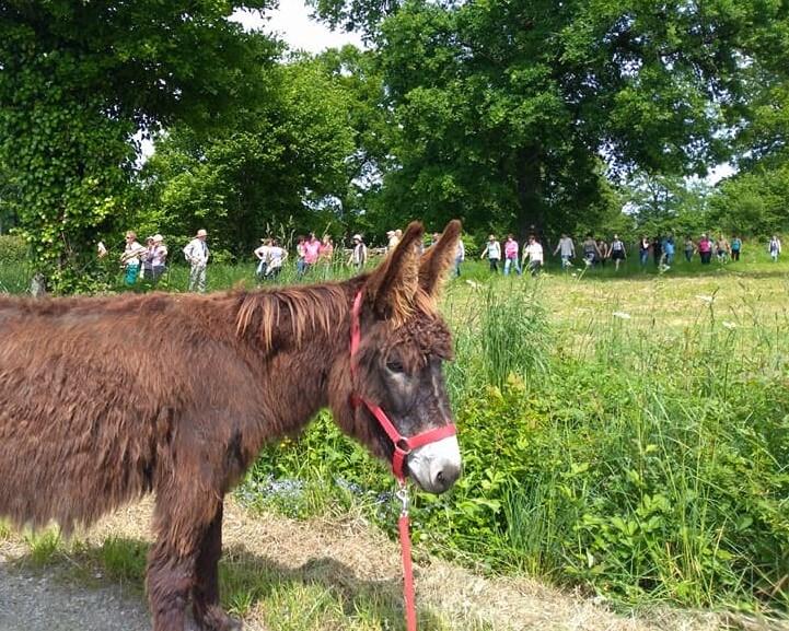 Randonnée de la fête de l'âne