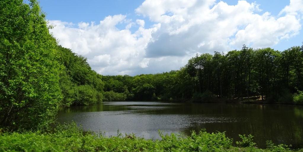 L'étang des Landes à Saint Paul